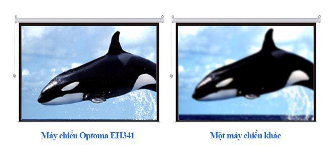 Máy chiếu Optoma EH341 cung cấp hình ảnh sống động, sắc nét