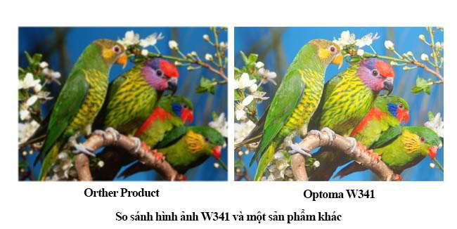 Optoma W341 chất lượng hình ảnh đẹp